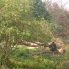 アメリカテキサス州ダラス動物園の実際のゴリラ展示の様子。元々の生息状況を模した環境作りが行なわれています。